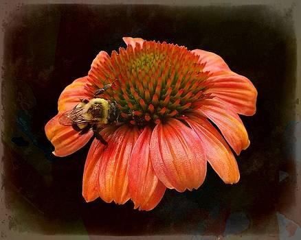 Joe Duket - Coneflower and Bee