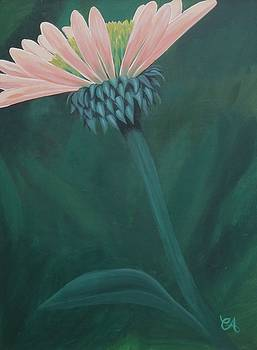 Coneflower by Carrie Auwaerter