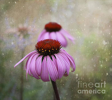 Coneflower Dream by Nina Silver