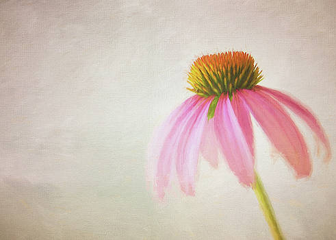 Coneflower by Michael James