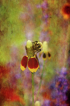 Coneflower With Bee 3267 IDP_2 by Steven Ward