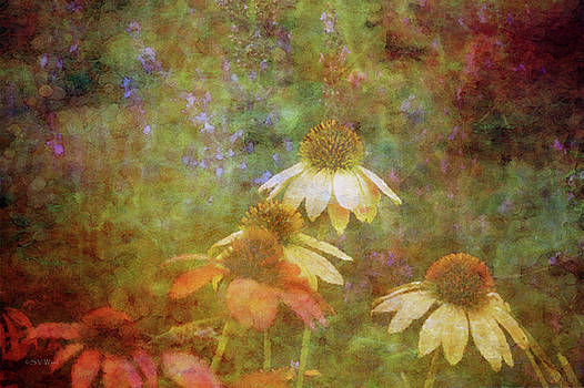 Coneflowers And Lavender 1635 IDP_2 by Steven Ward
