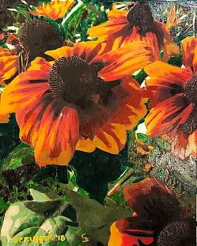 Coneflowers by Gary Springer