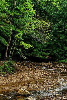 Confluence Tea Creek Williams River by Thomas R Fletcher