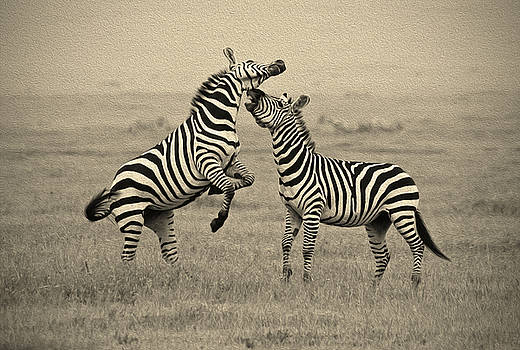 Confrontation in Stripes by Michele Burgess