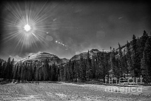 Conifer Serenity by Bill Frische
