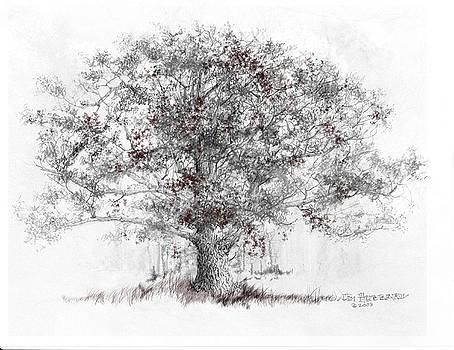 Jim Hubbard - Connecticut - White Oak