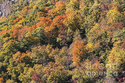Bob Phillips - Connecticut Fall Color