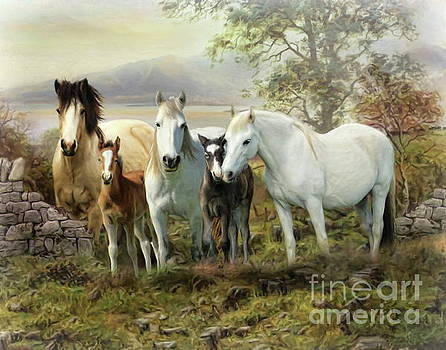 Connemara Ponies by Trudi Simmonds
