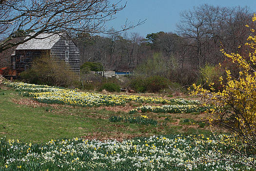 Connetquot in the Spring by Linda C Johnson
