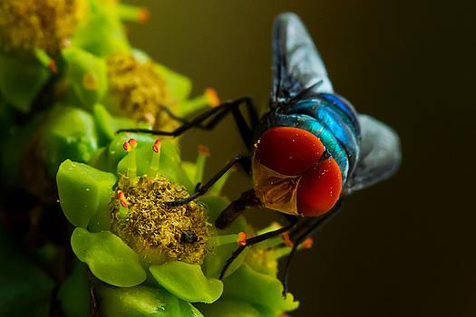 Compound Eye Of  Fly - Macro by Ramabhadran Thirupattur