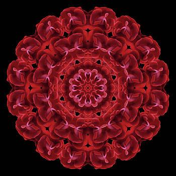 Consejo de Las Rosas -special request by Karen Casey-Smith