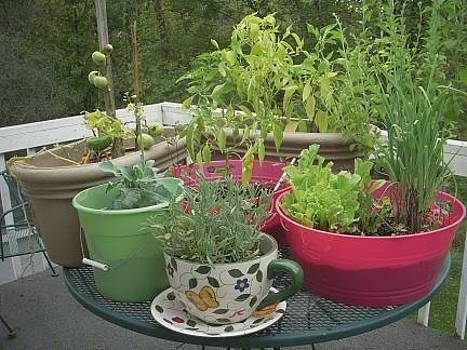 Container Garden by Deborah Finley