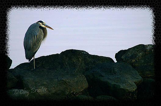 Clayton Bruster - Contemplating Heron