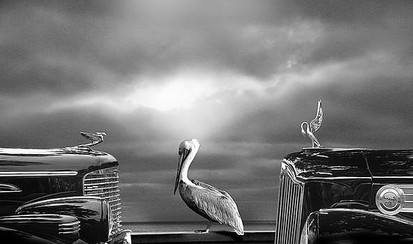 Larry Butterworth - CONTEMPLATING THE PELICAN