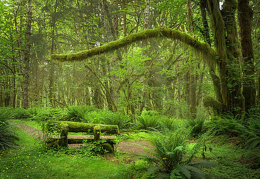 Contemplative Rain Forest by Jon Ares