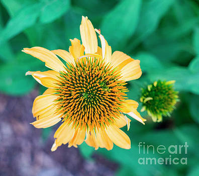 Contemporary Yellow and Green Floral Photo Art 443 by Ricardos Creations