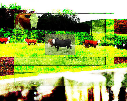 Contrasting Cows by Joseph Re