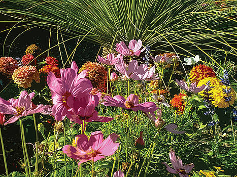 Stan  Magnan - Convention Center Flower Bed