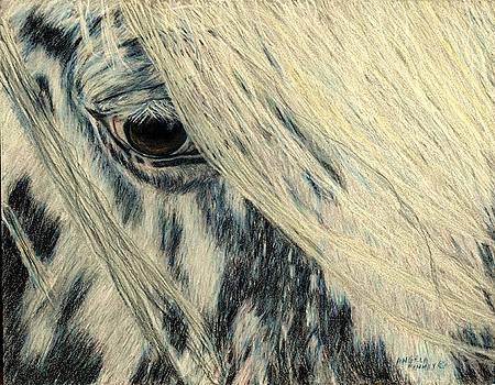 Cookie's Eye by Angela Finney