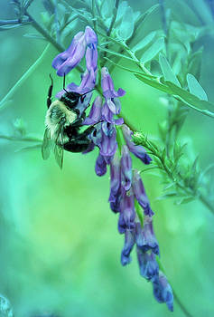 Aimee L Maher ALM GALLERY - Cool Blue Pollination