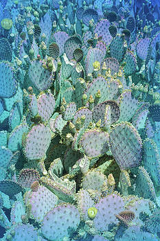 Aimee L Maher ALM GALLERY - Cool Blue Purple Prickly Pear 3