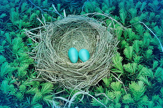Aimee L Maher ALM GALLERY - Cool Blue Robins Nest