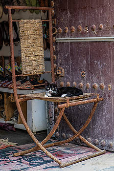 Cool Cat, Essaouira by Phil Callan Photography