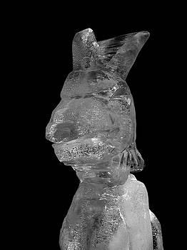 Cool Rabbit by Jouko Lehto