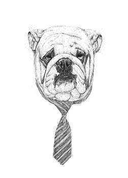 Cooldog by Balazs Solti