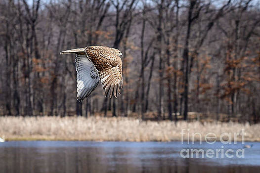 Coopers Hawk 4 by Patrick Shupert