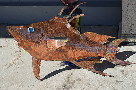 copper Hogfish by Vince Anthony