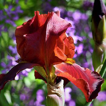 Teresa Mucha - Copper Iris Squared 4