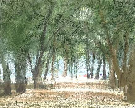 Coquina Beach Pines by Mary Lynne Powers