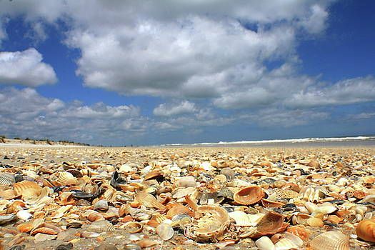 Coquina Country by Charles Shedd