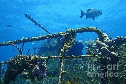 John Malone - Coral and Fish on a Caribbean Shipwreck