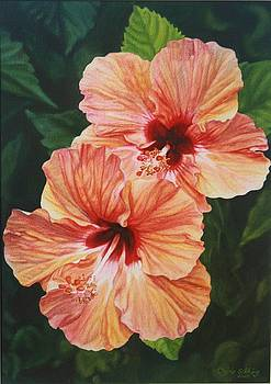 Coral Hibiscus by Cherie Sikking