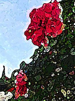 Coral Hibiscus by Peggy De Haan