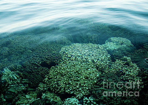 Charmian Vistaunet - Coral Reef and Ocean Surface