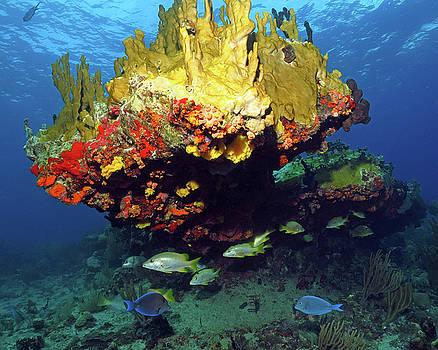Pauline Walsh Jacobson - Coral Reef Scene, Calf Rock, Virgin Islands