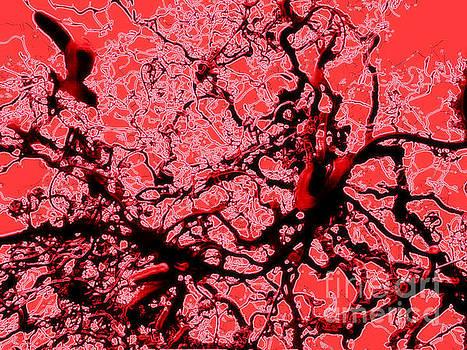 Coral Sea by Eve Penman