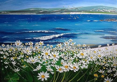 Coral Strand Daisies Connemara Ireland by Diana Shephard