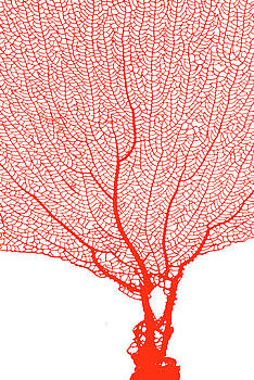 Coral Tangerine by Ramona Murdock