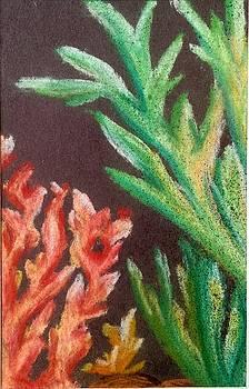 Coral by Tara Bennett