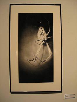 Cordyceps Spider by Sarah Mushong