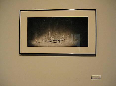 Cordyceps Stick Bug by Sarah Mushong