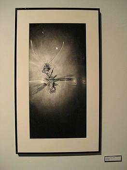 Cordyceps Wasp by Sarah Mushong