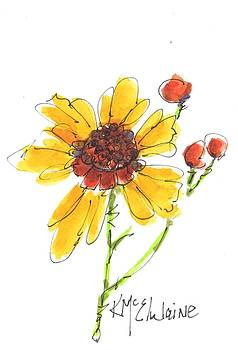 Coreopsis By Kathleen McElwaine by Kathleen McElwaine