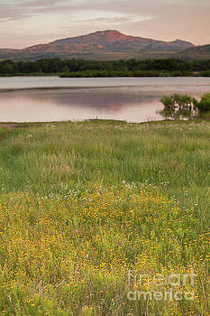 Corepsis blooming at the Quanah Parker Lake by Iris Greenwell