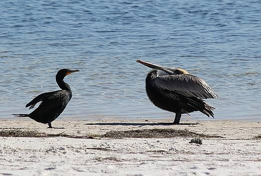 Cormorant and Pelican by Theresa Willingham